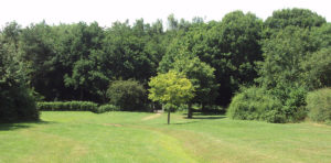 Parks and Green Space